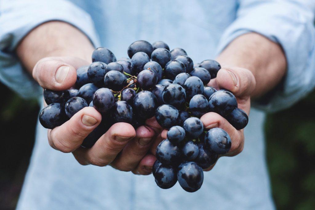 Comment-choisir-les-raisins-les-plus-frais