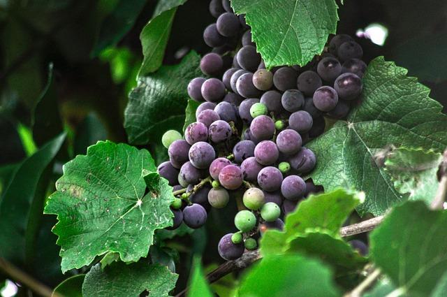les-raisins